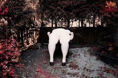 Kooiker Paul Sunday 2011.jpg 1620×1080 pixels #woman #nude #photo #kooiker #sunday #photography #garden #paul
