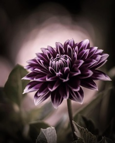 #flowerstagram: Creative Flowers Photography by Hiko Takahashi