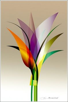 Bromeliad | Flickr - Photo Sharing! #design #graphic #illustration #graph #poster #art #awesome