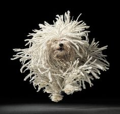 Tim Flach | Dogs | bumbumbum #flach #amazing #gods #tim #dogs #photography #dog