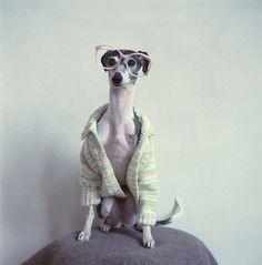 Mini eco Part 3 #glasses #pink #photo #photography #sweater #dog
