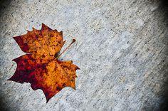 Leaf #nature #fall #leaf