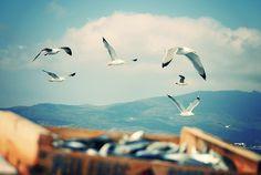 tumblr_m3ghu1heM21qzleu4o1_500.jpg (500×335) #seagull