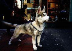 DeadFix » Woof
