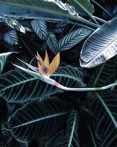 Grow. #seattle #plants #vsco #vscocam #conservatory #washington #grow #growing #iphone
