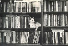 3317_ab42 #photo #books #cat #library #shelf