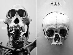 APE | MAN | Flickr - Photo Sharing! #horniman #skeleton #museum #photography #evolution #face