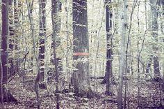 Sin título | Flickr: Intercambio de fotos #scott #forest #roth