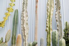 on Flickr Photo Sharing! #spikes #white #plants #cream #wall #cactus #green