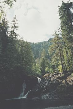Forest by Steven Heisenberg #woods #landscape #nature #photography #vintage #forest #waterfall #trees