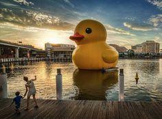 http://i.imgur.com/gqilq.jpg #duck