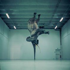 elephant upside down #elephant
