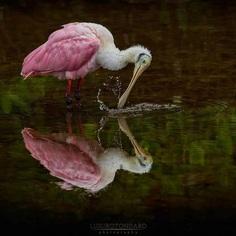 #bestbirdshots: Magnificent Bird Photography by Luigi Rotondaro