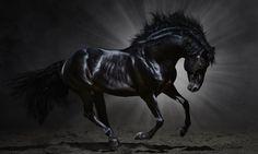 Fantasy Horse Dark Background Hd Wallpapers – WallpapersBae