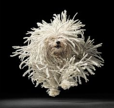 Fotografía de Perros por Tim Flach — Monkeyzen #flach #movement #tim #photography #dog