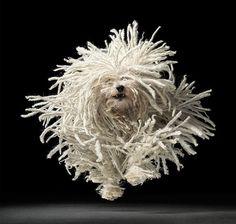 Fotografía de Perros por Tim Flach — Monkeyzen #photography #dog #movement #tim flach