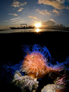 Hairy in the Sunrise by Enrico Somogyi