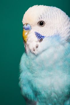 Photography(_MG_2840 by Dylan Osborne on Flickr. Via theanimaleffect) #photography