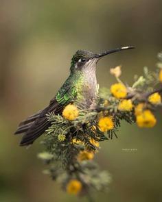 #birdsofinstagram: Fantastic Birds Photography by Mario Wong