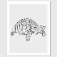 """The Tortoise"" by Kyle Naylor #Tortoise #illustration"