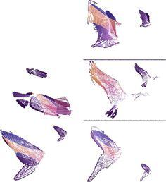 Flight videos deconstructed #wings #gif #flight