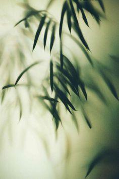 marionberrin 04 #foliage #plants #focus #window #trees
