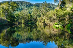 Oxley River reflection