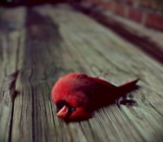 All sizes | Untitled | Flickr - Photo Sharing! #colourful #red #bird #wood #dead #sad
