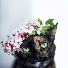 Magdalena GrzeÅ›kowiak Captures Her Cat Through The Seasons