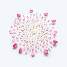 Lotus Exploded 01, Singapore #pink #photography #flowers