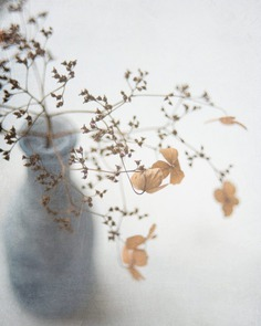 Beautiful Flower and Plant Photography by Alison Staite
