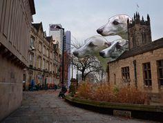 Greyhounds in Manchester by Maria Umiewska feat.Nadia Konina