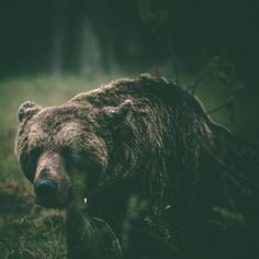 GO 70xc2xb0 NORTH: Alexander Kopatz #bear #photography #nature