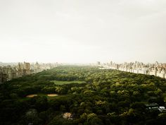 PATIENCE Color Photographs by Josef Hoflehner & Jakob Hoflehner #new york #green #photo #city #central park