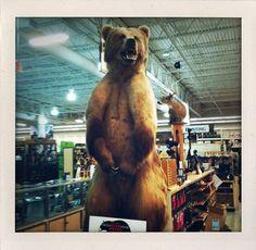DANTE ROSS #bear