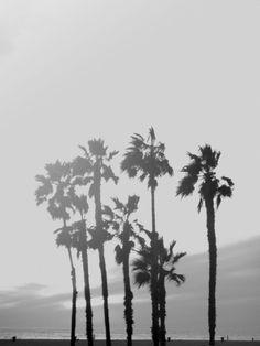 _CA __california ___palms, venice beach PHOTOGRAPHIE © [ catrin mackowski ]