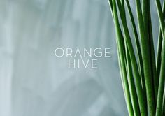 Orange Hive Identity Minimalissimo #hive #orange