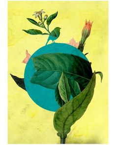 The Hyspanic Gentleman » Blog Archive » Wax Jambu #birds #collage #floral