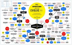 What Species Did You Evolve From? Matt Chase | Design, Illustration #infographic