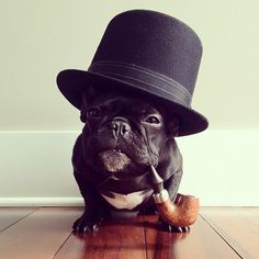 Standing Elements #hat #dog #pipe #french bulldog