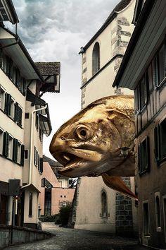 Die Obdachlosikgkeit der Fische on Behance #fisch #swiss #fish #fotografie #zug #composing