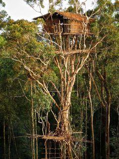 Skyscraper Tree House At The Korowai Tribe, Southeast Indonesian Province Of Papua