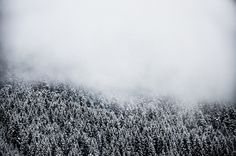 Fog. on Behance #fog #georgia #misty #minimal #forest #winter