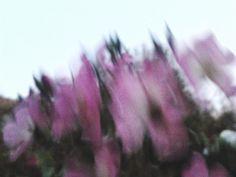 `agnieszkaicel #polish #photographs #autumn #flores #flowers