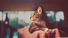 Bokeh Cat Portrait