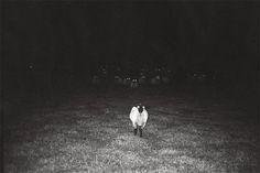 tumblr_lkzuncNmLU1qz4hjyo1_500.jpg 500×334 pixels #sheep #white #black #and