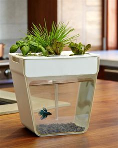 "CJWHO â""¢ (Home Aquaponics Kit: Self Cleaning Fish Tank That...) #amazing #self #design #fish #tank #aquaponics #cleaning #kickstarter #clever"