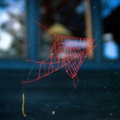 Nina Katchadourian, Mended Spider Webs #nina katchadourian #mended spider webs