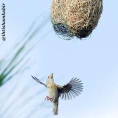 #birds_adored: Stunning Birds Photography by Ihtisham Kabir