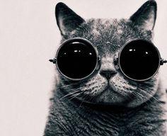 cat wit glasses